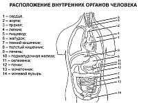 Резервные возможности организма человека, восполнение энергетических затрат за счет питания