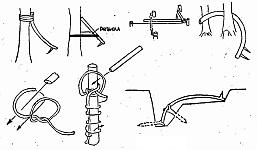 Действующие элементы простых ловушек в виде хлестающих гибких веток, возможно с шипами или лезвием
