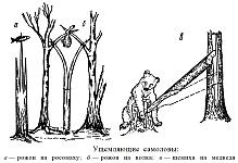 Деревянные ущемляющие самоловы, рожон, щемиха и жом, назначение, устройство, изготовление, установка и настройка