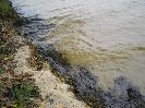 Грязная вода взятая из открытого источника