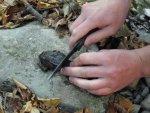 Ловля лягушек и жаб, способы приготовления лягушек и жаб и употребления в пищу