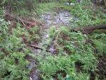 Углеродные салфетки Sorusal и Legius для лечения ран, ожогов, обморожений, пролежней, нестандартное использование салфеток Sorusal и Legius в качестве фильтра для воды в полевых условиях