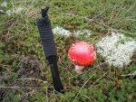 Грибы как пища в походных условиях, профилактика отравлений грибами, опасные мифы и заблуждения при определении ядовитых грибов