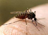Профилактика и  помощь при укусах комаров