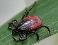 Профилактика и помощь при укусах насекомых