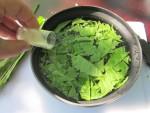 Салат из листьев одуванчика, рецепт, подготовка листьев одуванчика для приготовления салата