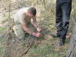 Ловушки для ловли мелких животных, эффективность, выбор места для установки, настройка и маскировка ловушек