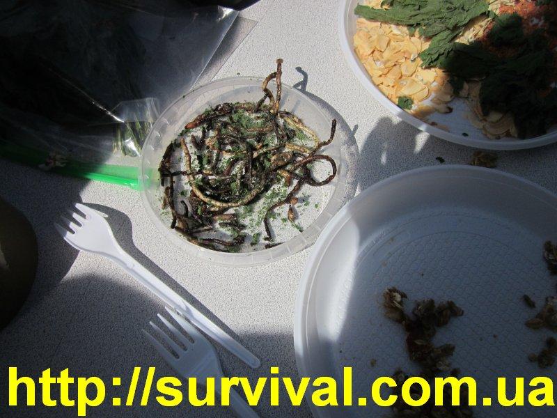 приснилось червяк  про  рыбалки