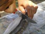 Тест туристического ножа Игла от ООО Кизляр на продуктах