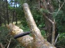 Мачете Кайман от ООО Кизляр, характеристики, обзор, тест, рабочие качества мачете Кайман при рубке и заготовке дров