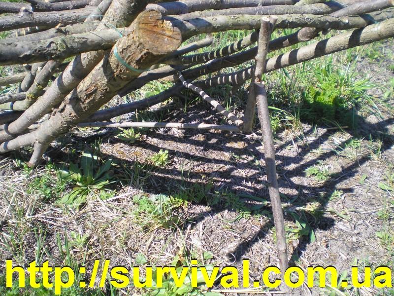 Как сделать ловушку на фазана в домашних условиях