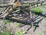 Установка и настройки ловушки для ловли птиц с автономным спусковым устройством