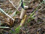 Изготовление ловушек, простейшие ловушки для ловли мелких животных