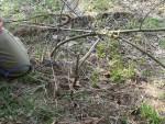 Ударные ловушки со спусковым рычагом, распоркой и растяжкой для добычи животных и крупных птиц, изготовление, установка и настройка ловушек ударного типа
