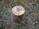 Разжигание индейской свечи, деревянного примуса, финской свечки, регулируем пламя индейской свечи, горение деревянного примуса