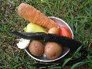 Тестирование ножа Пиранья на продуктах