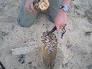 Большая толщина клинка Стрелы позволяет без особых усилий расщеплять сухие дрова
