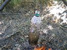 После появления большого количества пузырьков поднимающихся от дна, сдвигаем пластиковую бутылку чуть в сторону от костра