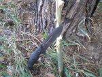 Тактический нож Zero Tolerance ZT0100 G-10 Matte Black, Fixed Blade, Plain Edge, описание, характеристики, обзор