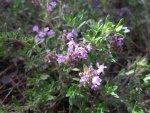 Растения с инсектицидными и репеллентными свойствами