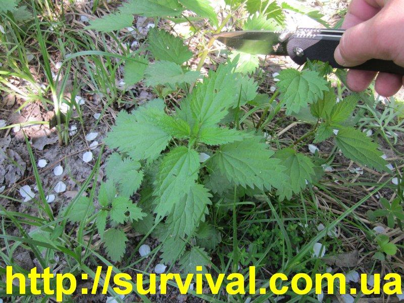 read How to Eradicate Invasive