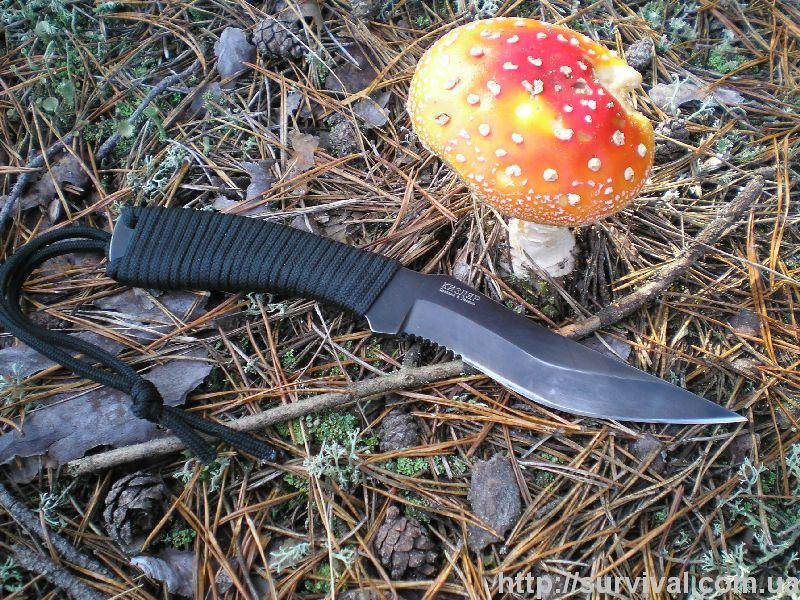 грибы которые растут в березовых посадках фото